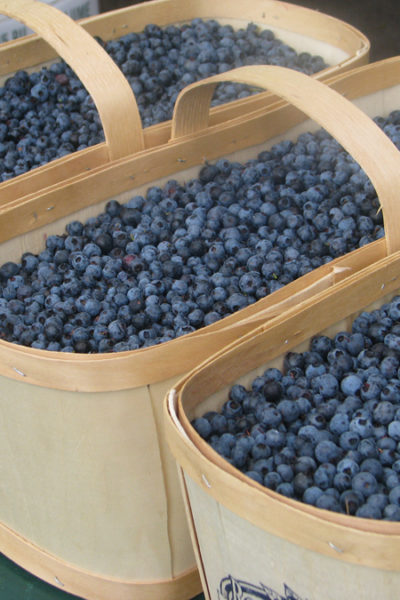 Quebec Lac Saint-Jean wild blueberries