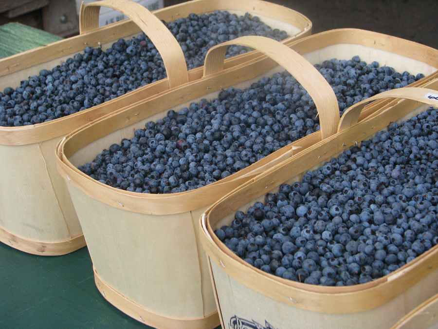 Quebec Lac Saint-Jean wild blueberries
